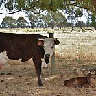Born Yesterday. by Jeanette Varcoe