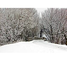 Trestle in the Trees Photographic Print