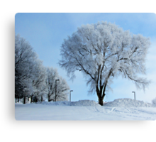 Winter Frosting Metal Print