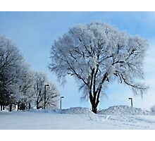 Winter Frosting Photographic Print
