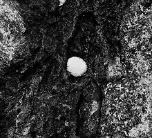 Rock and Snow by Jeffrey  Sinnock