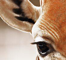 Giraffe Level by Steven Powell
