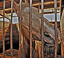 Let me out by pdsfotoart