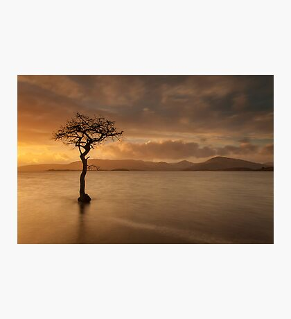 The Tree of Milarrochy Photographic Print