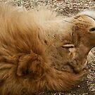 Sleepy boy by JenniferLouise