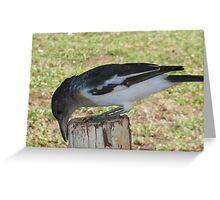 Butcher Bird at Work: Derby, Western Australia Greeting Card