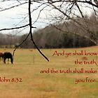 And ye shall know the truth. . . by aprilann