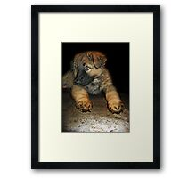 What do mean, my paws are too big ?  Framed Print