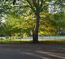 Sunny Park Tree by Claire Elford