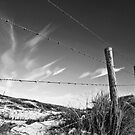 Wire fence by pahas
