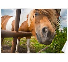 Pony behind fence Poster