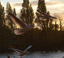 In Flight by Claire Elford