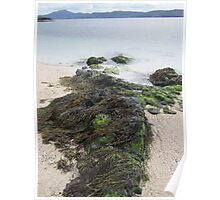 Rocks and seaweed Poster