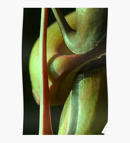 vegetal sensuality Poster