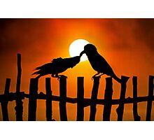 Birds Love Photographic Print