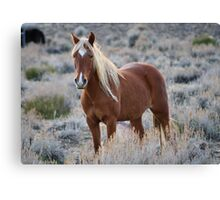 Blonde Beauty,Reno Nevada USA Canvas Print
