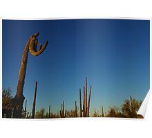 """""""Boxing saguaro"""", Saguaro National Park, Arizona Poster"""