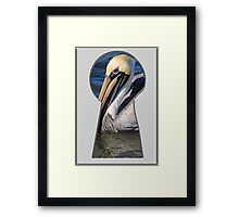 Brown Pelican Through the Key Hole Framed Print