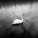 SWAN by Stan Owen