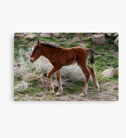 Going to Play,Reno Nevada,USA Canvas Print