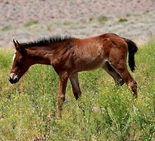 What a life,Reno,Nevada,USA by Anthony & Nancy  Leake