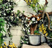 Potted Tree by Garden Wall by davidkyte