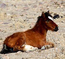 Time to rest,Reno Nevada USA by Anthony & Nancy  Leake