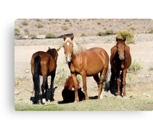The Gangs All Here,Reno Nevada USA Canvas Print