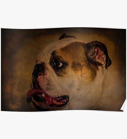 English Bulldog - Bruiser Poster