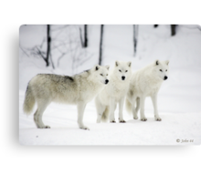 ..a different Wolf Pack... Canvas Print