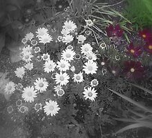 Patch of Daisies by Adrena87