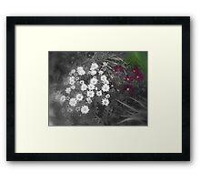 Patch of Daisies Framed Print