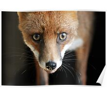 Buster the Fox Poster