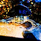 Neon Turtle Illuminated by kalikristine