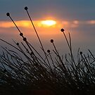 Buttongrass Sunset, South West Cape Range by tasadam