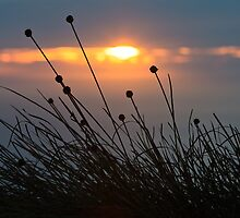 Buttongrass Sunset, South West Cape Range by tasadam