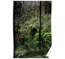 Alpine Forest - Dogwood & Tree Ferns Poster