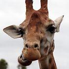 Talking Giraffe by PenguinSands
