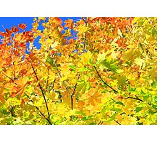 vivid autumn leaves Photographic Print