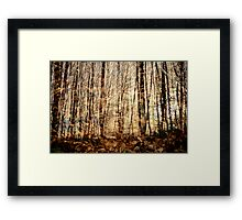 Multiple forest Framed Print