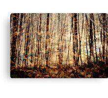 Multiple forest Canvas Print