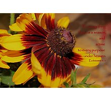To Everything There Is A Season. . . Photographic Print