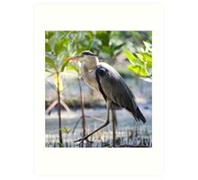Wild heron in kenya Art Print