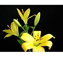 Yellow Lilies Photographic Print