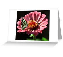 Wit Sandsittertjie Greeting Card