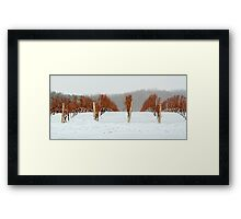 Niagara Vineyard Framed Print
