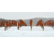 Niagara Vineyard Photographic Print