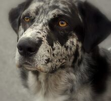 Atlas is his name.............A Catahoulas... by Larry Llewellyn