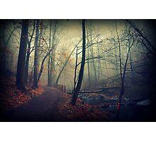 Follow the Creek Photographic Print
