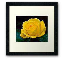 """""""Arthur Bell"""" Rose Framed Print"""